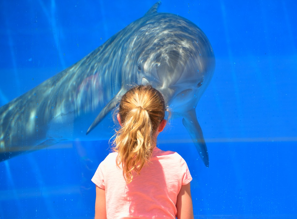 a child and a dolphin