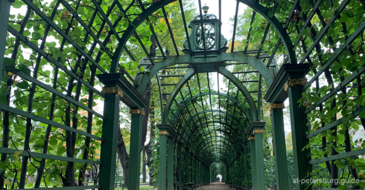 The green corridor of Summer Garden in Saint Petersburg. Constructed arch surrounded by green blooming plants.