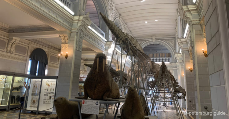 Whales, exhibits in the Zoological museum in St Petersburg Russia