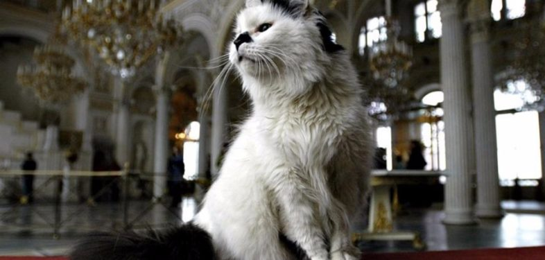 Cat sitting in the hall of State Hermitage Museum, Saint Petersburg